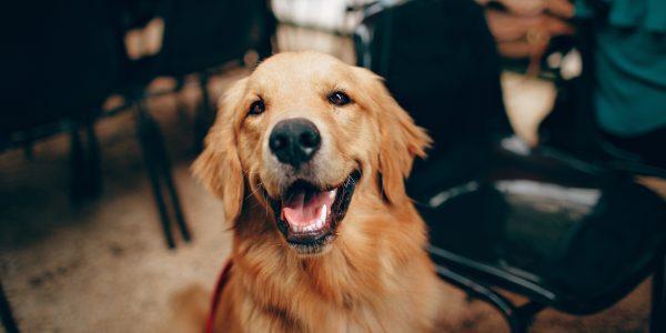 Prévenir l'arthrose chez le chien
